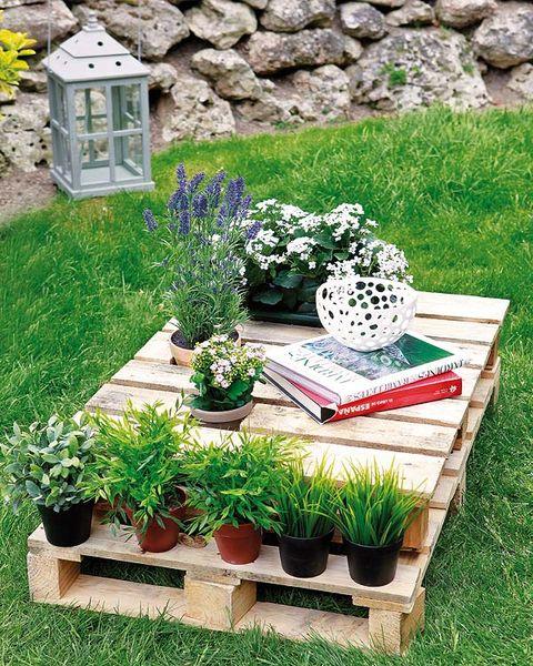 Flowerpot, Plant, Rock, Garden, Shrub, Lavender, Groundcover, Interior design, Herb, Houseplant,