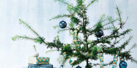 Christmas tree, Tree, Branch, Colorado spruce, Flowerpot, Christmas decoration, Twig, Plant, Turquoise, Houseplant,