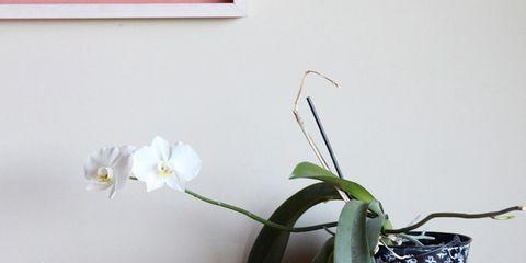 Petal, Flower, Flowering plant, Botany, Teal, Still life photography, Flowerpot, Pedicel, Plant stem, Home accessories,