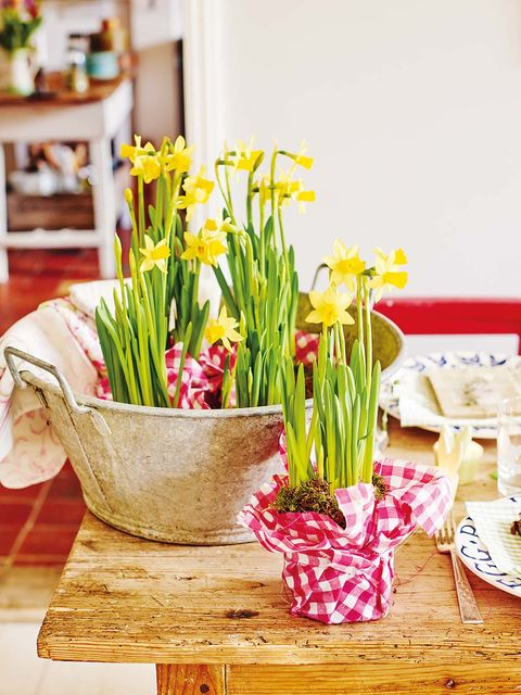 Flower, Yellow, Plant, Spring, Flowerpot, Cut flowers, Floristry, Narcissus, Flower Arranging, Table,