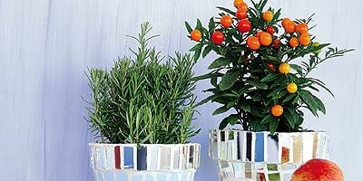 Serveware, Dishware, Fruit, Produce, Drinkware, Tableware, Flowerpot, Still life photography, Natural foods, Ingredient,