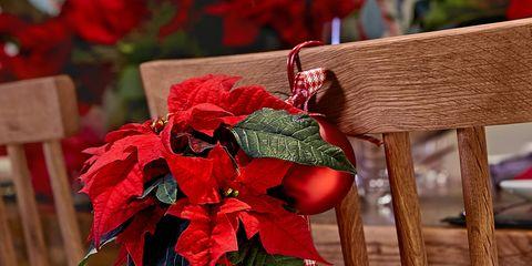 Wood, Petal, Red, Flower, Cut flowers, Hardwood, Carmine, Flower Arranging, Twig, Flowering plant,