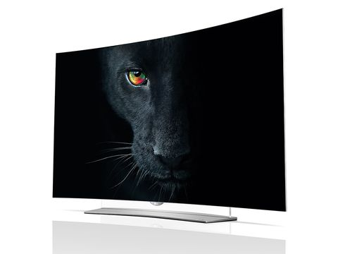 Display device, Flat panel display, Carnivore, Television set, Whiskers, Felidae, Output device, Computer monitor accessory, Black, Terrestrial animal,