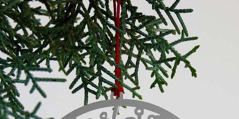 Circle, Christmas decoration, Illustration, Symbol, Conifer, Christmas, Seahorse, Fir, Pine family, silvertip fir,