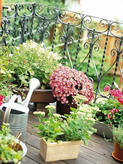 Flowerpot, Plant, Flower, Interior design, Garden, Shrub, Houseplant, Ingredient, Herb, Iron,
