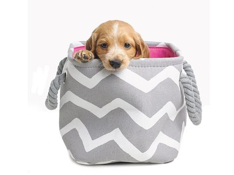 Dog breed, Brown, Vertebrate, Dog, Dog supply, Carnivore, Dog bed, Pet supply, Dog clothes, Sporting Group,