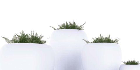 Plant, Flowerpot, Terrestrial plant, Lavender, Houseplant, Vase, Annual plant, Perennial plant, Pottery, Artifact,