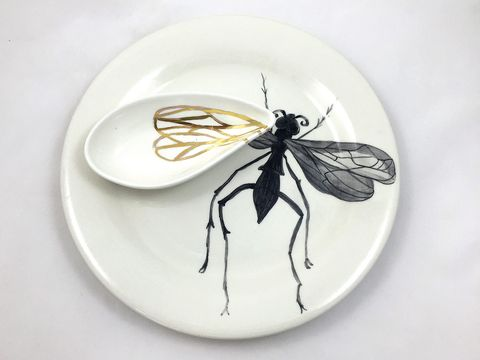 Invertebrate, Insect, Arthropod, White, Pest, Wing, Dishware, Net-winged insects, Black, Membrane-winged insect,
