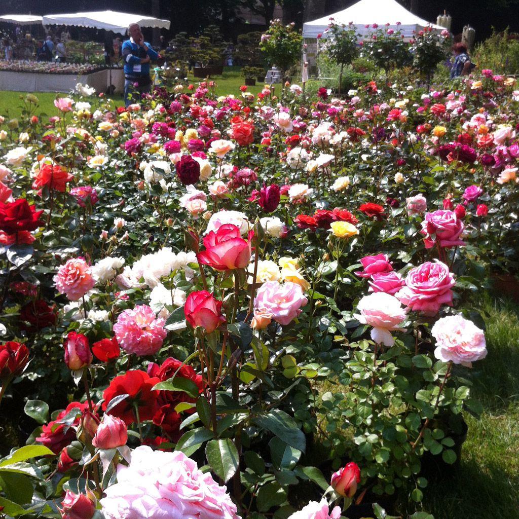 Plantas Y Flores Para Decorar Tu Jardin - Como-decorar-un-jardin-con-plantas-y-flores