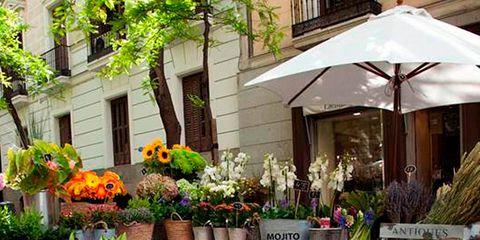Flowerpot, Plant, Flower, Floristry, Petal, Flower Arranging, Floral design, Interior design, Houseplant, Annual plant,