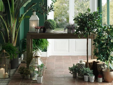 Houseplant, Property, Flowerpot, Building, Furniture, Courtyard, Room, Plant, House, Floor,