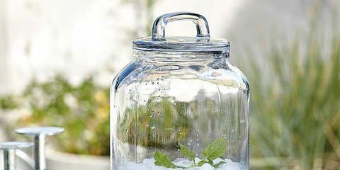 Drinkware, Glass, Liquid, Fluid, Barware, Stemware, Drink, Transparent material, Serveware, Champagne stemware,