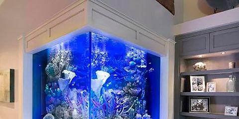 Blue, Wood, Floor, Interior design, Flooring, Room, Glass, Hardwood, Wood flooring, Laminate flooring,