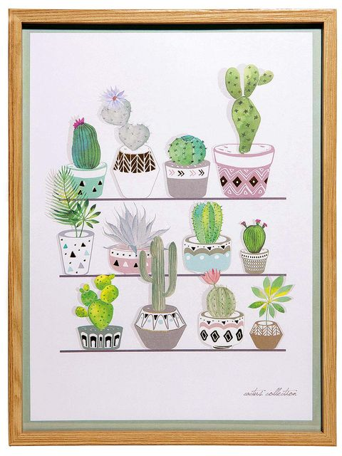 Organism, Green, Botany, Adaptation, Flowering plant, Terrestrial plant, Illustration, Cactus, Rectangle, Succulent plant,