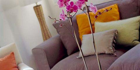 Serveware, Room, Interior design, Dishware, Living room, White, Furniture, Couch, Pillow, Interior design,