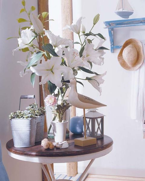 Hat, Flower, Petal, Room, Interior design, Serveware, Flowerpot, Interior design, Bouquet, Artifact,