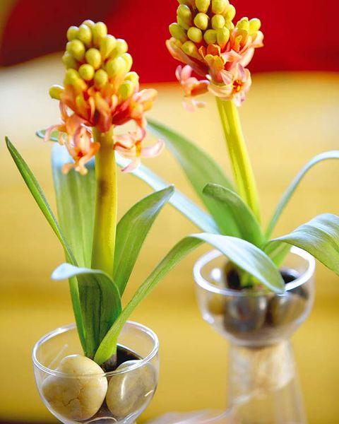 Yellow, Plant, Flower, Flowerpot, Flowering plant, Botany, Terrestrial plant, Interior design, Vase, Houseplant,