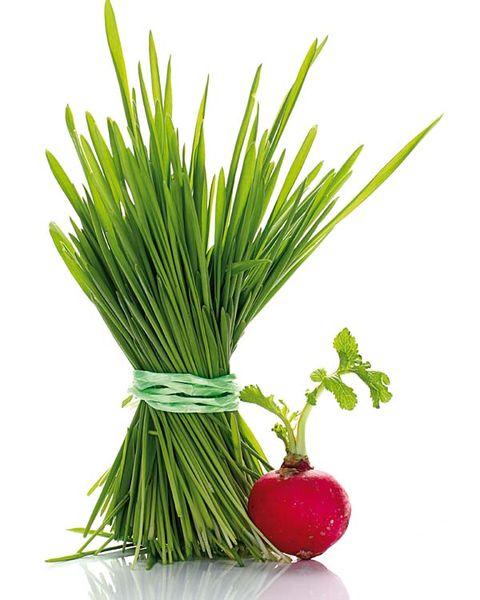 Leaf, Produce, Still life photography, Natural foods, Creative arts, Fruit, Plant stem, Conifer,