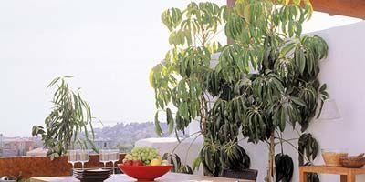 Wood, Room, Table, Leaf, Furniture, Hardwood, Outdoor table, Chair, Outdoor furniture, Coffee table,