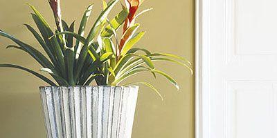 Yellow, Room, Interior design, Flowerpot, Wall, Dishware, Interior design, Door, Serveware, Artifact,