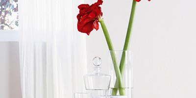 Petal, Room, Flower, Red, Interior design, White, Interior design, Artifact, Cut flowers, Glass,