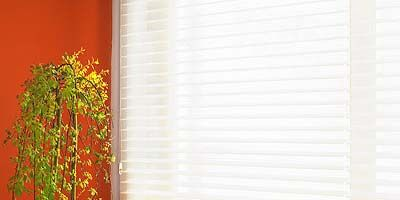 Wood, Wall, Interior design, Fixture, Rectangle, Window covering, Interior design, Houseplant, Coquelicot, Annual plant,