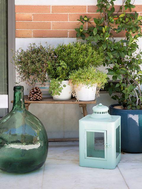 Green, Flowerpot, Teal, Turquoise, Aqua, Glass, Houseplant, Vase, Artifact, Interior design,