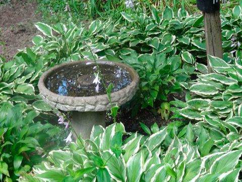 Leaf, Botany, Garden, Terrestrial plant, Shrub, Groundcover, Water feature, Circle, Plantation, Annual plant,