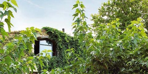 Garden, Woody plant, House, Backyard, Lawn, Yard, Home, Environmental art, Landscaping, Lawn ornament,