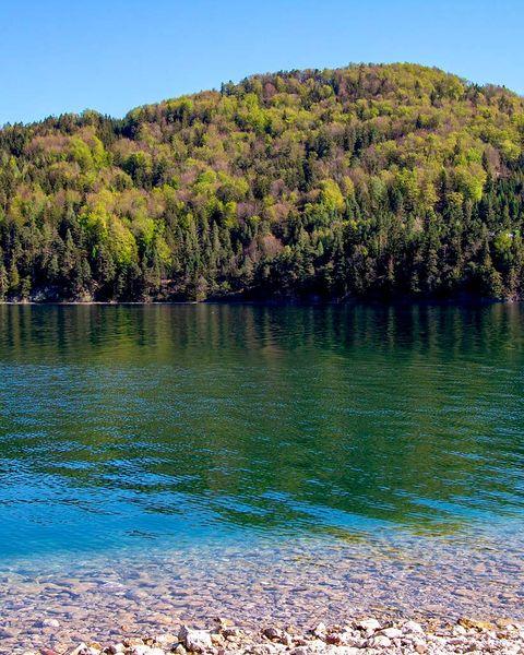 paisaje lago en el bosque