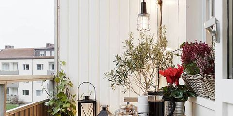 Flowerpot, Interior design, Room, Sheep, Home, Petal, Interior design, Sheep, House, Houseplant,