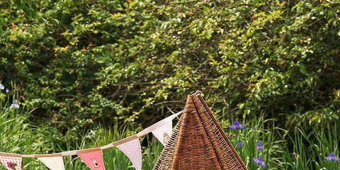 Leaf, Plant community, Grass family, Slope, Groundcover, Shrub, Triangle, Jungle, Meadow, Plantation,