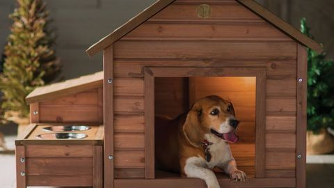Dog, Canidae, Kennel, Doghouse, Dog supply, Dog breed, Beagle, American foxhound, Treeing walker coonhound, Carnivore,