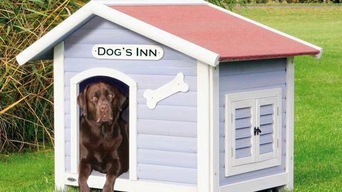 Kennel, Doghouse, Shed, Dog supply, Grass, Sporting Group, House, Canidae, Outdoor structure, Building,