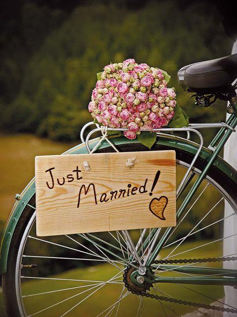 Bicycle tire, Wheel, Bicycle wheel rim, Bicycle accessory, Bicycle part, Flower, Petal, Bicycle, Bicycle wheel, Rim,