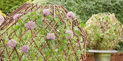 Plant, Sphere, Grass, Flower, Interior design, Flowerpot, Yard, Lamp, Lighting accessory,