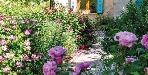 jardín con rosales en flor