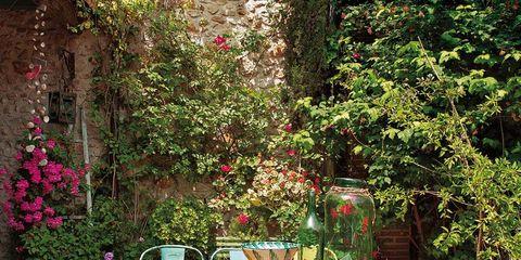 Plant, Table, Furniture, Chair, Outdoor table, Shrub, Garden, Outdoor furniture, Backyard, Patio,