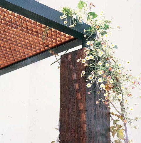 Tree, Wall, Branch, Plant, Leaf, Window, House, Twig, Flower, Spring,