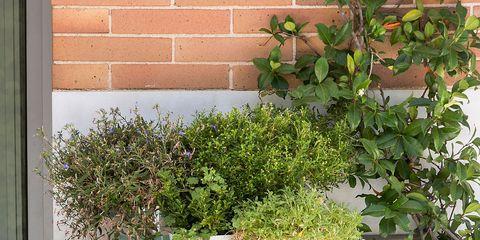 Blue, Plant, Flowerpot, Teal, Aqua, Turquoise, Glass, Artifact, Houseplant, Vase,