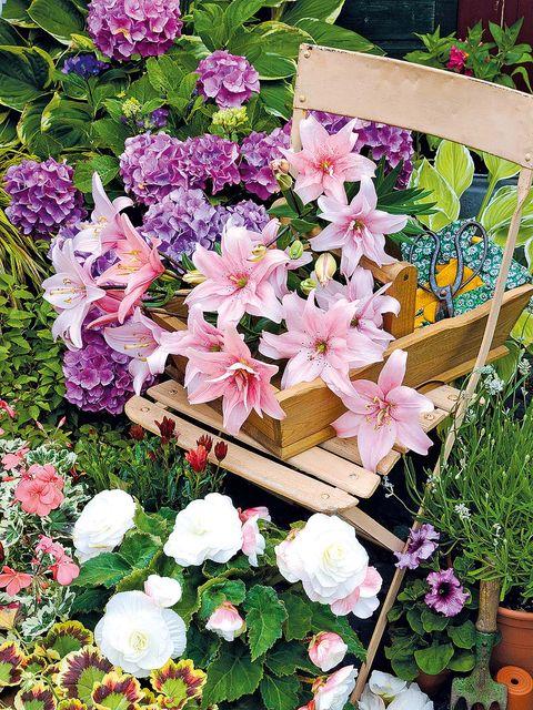 Flower, Flowering plant, Plant, Petal, Pink, Botany, Floristry, Spring, Floral design, Flower Arranging,