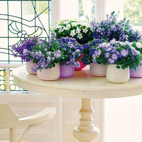 Flowerpot, Plant, Flower, Purple, Lavender, Interior design, Violet, Vase, Artifact, Majorelle blue,
