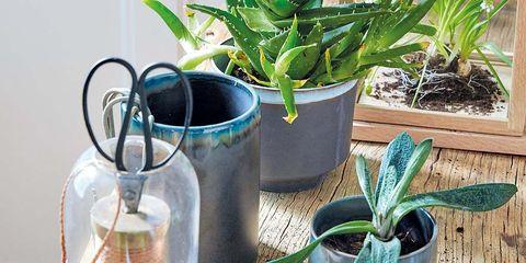 Plant, Flowerpot, Leaf, Interior design, Botany, Terrestrial plant, Houseplant, Annual plant, Mixing bowl, Plant stem,