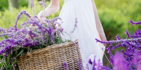 Purple, Lavender, Shrub, Flower, Violet, Basket, Lavender, Wicker, Storage basket, Flowering plant,