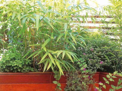 Barrera de jardineras fiberland con bambus azoteas verdes - Jardineras con bambu ...