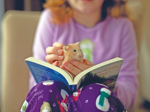 Purple, Pink, Hamster, Hand, Toy, Reading, Rat, Fawn, Ear, Love,