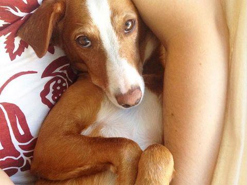 Cuidar a tus mascotas de la gripe