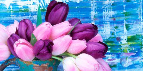 Blue, Petal, Flower, Purple, Pink, Magenta, Flowering plant, Paint, Art, Still life photography,