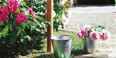 Jardinería: Cómo cuidar las plantas