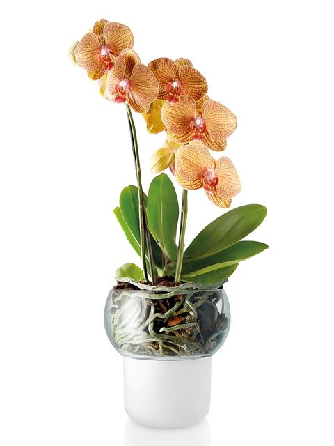 Flower, Flowering plant, Flowerpot, Plant, moth orchid, Houseplant, Cut flowers, Botany, Artificial flower, Moth Orchid,